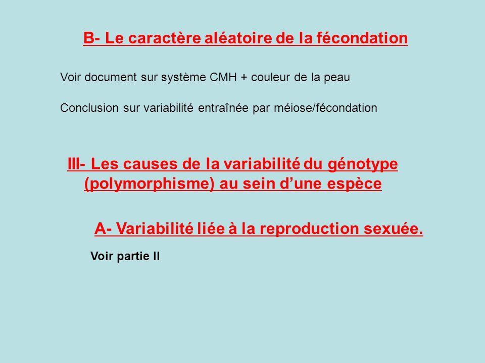 B- Le caractère aléatoire de la fécondation