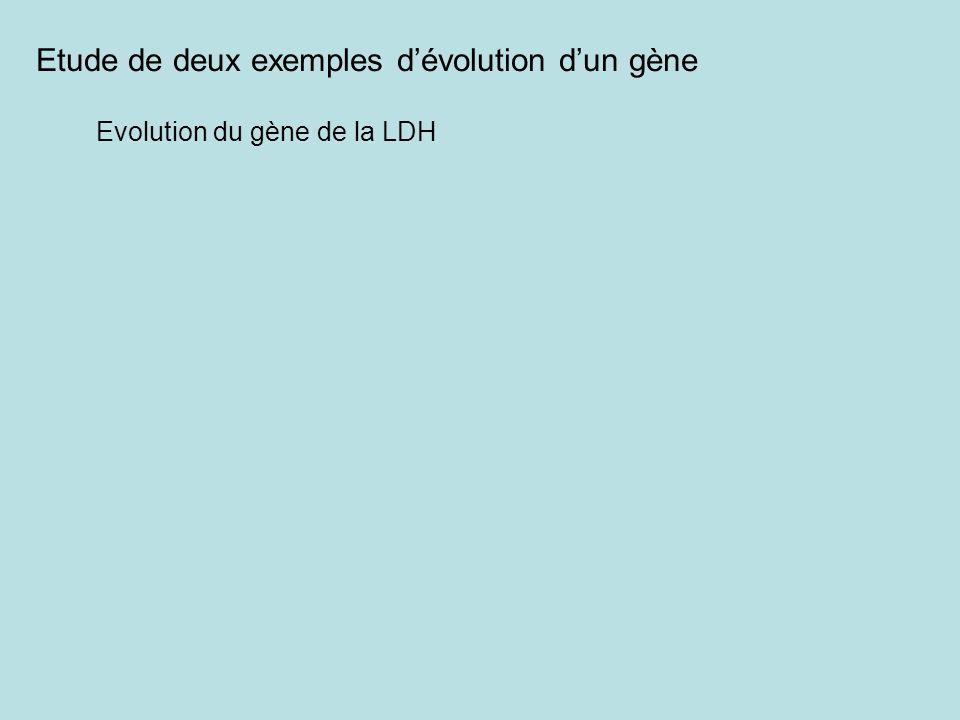 Etude de deux exemples d'évolution d'un gène