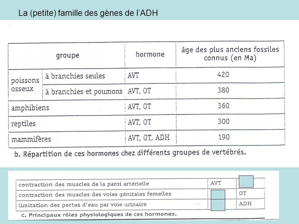 La (petite) famille des gènes de l'ADH