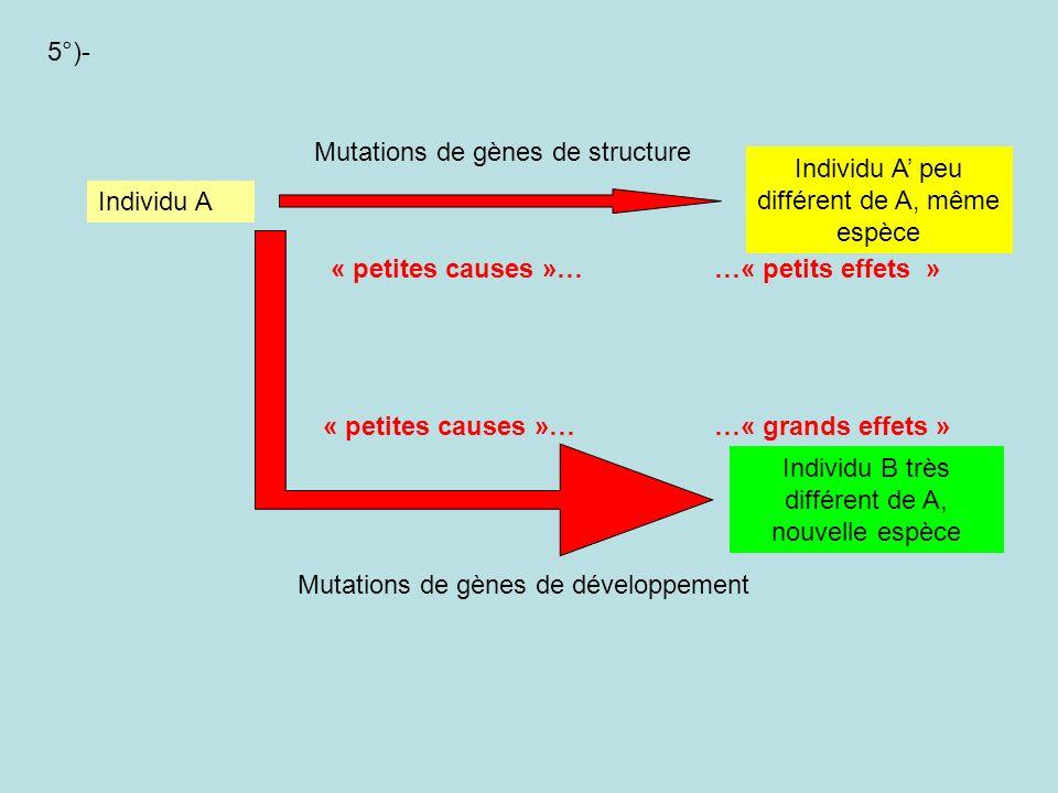 Mutations de gènes de structure