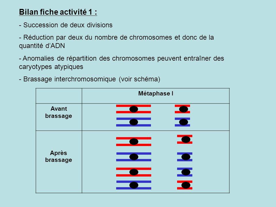 Bilan fiche activité 1 : Succession de deux divisions
