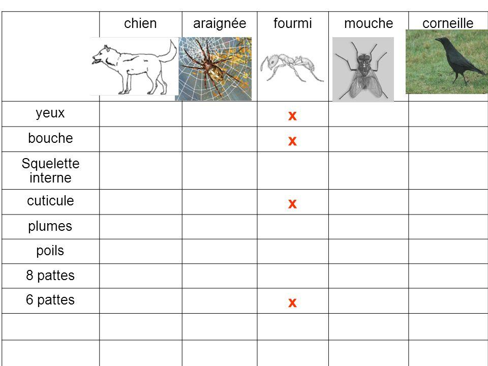 x chien araignée fourmi mouche corneille yeux bouche Squelette interne