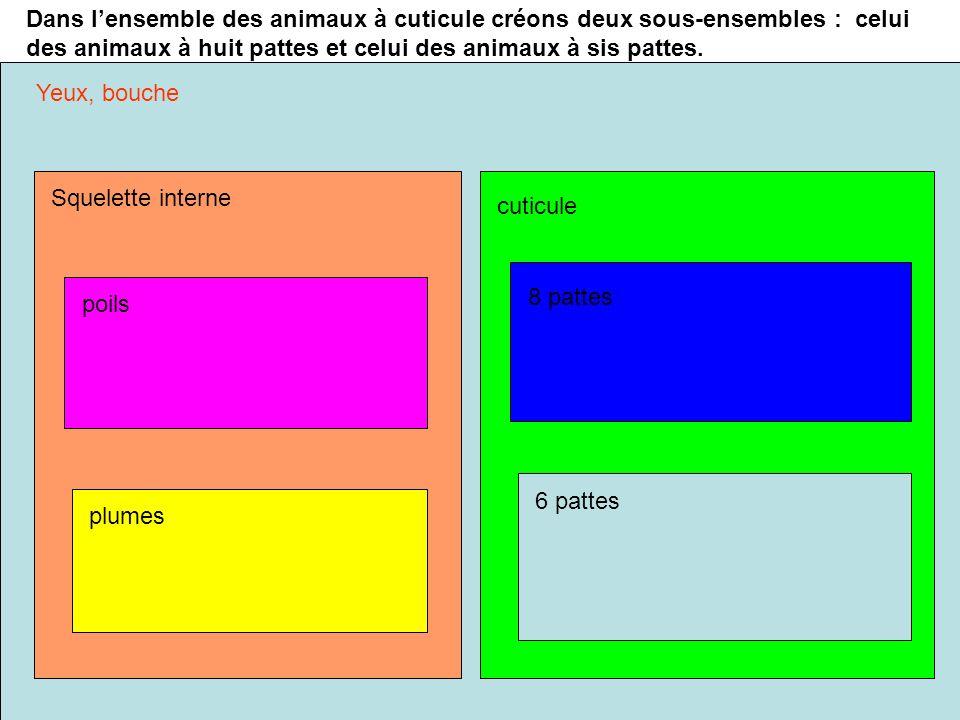 Dans l'ensemble des animaux à cuticule créons deux sous-ensembles : celui des animaux à huit pattes et celui des animaux à sis pattes.
