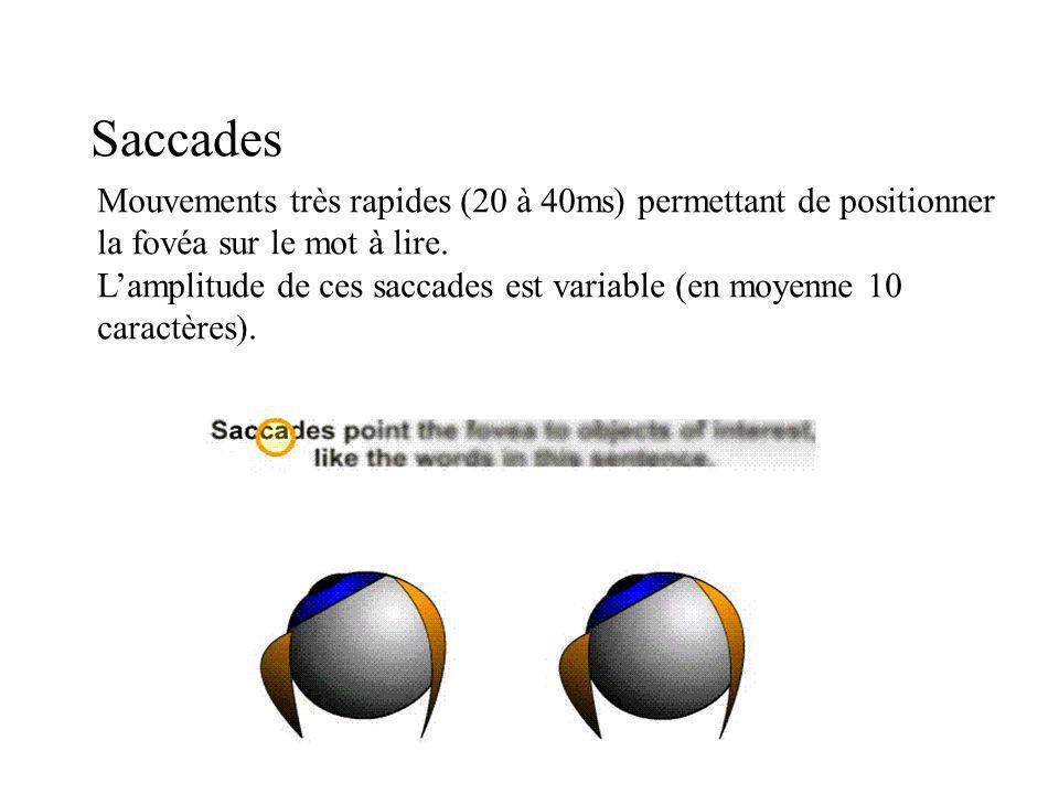Saccades Mouvements très rapides (20 à 40ms) permettant de positionner la fovéa sur le mot à lire.