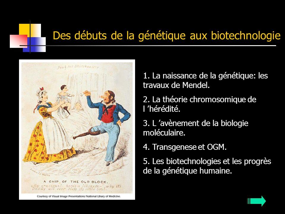 Des débuts de la génétique aux biotechnologie