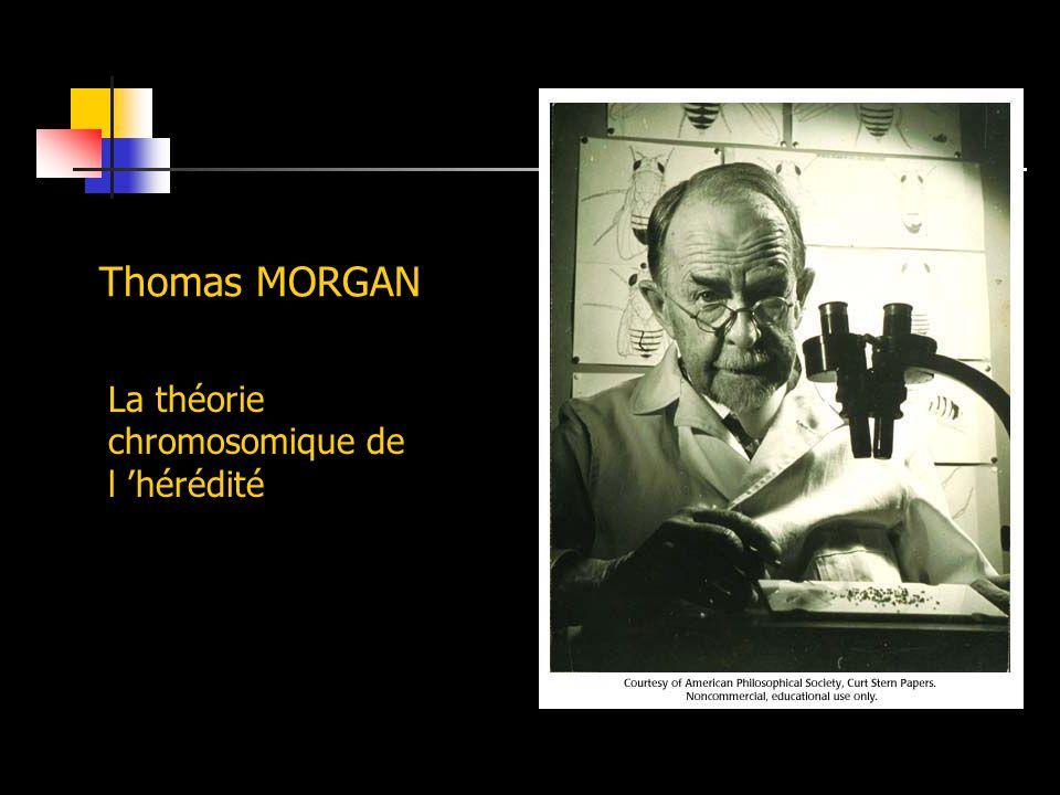 Thomas MORGAN La théorie chromosomique de l 'hérédité