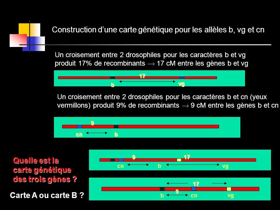 Construction d'une carte génétique pour les allèles b, vg et cn