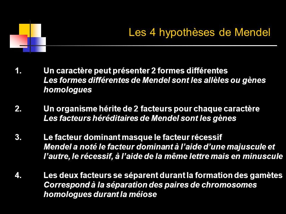 Les 4 hypothèses de Mendel
