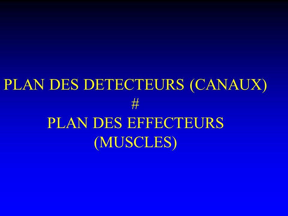 PLAN DES DETECTEURS (CANAUX) # PLAN DES EFFECTEURS (MUSCLES)