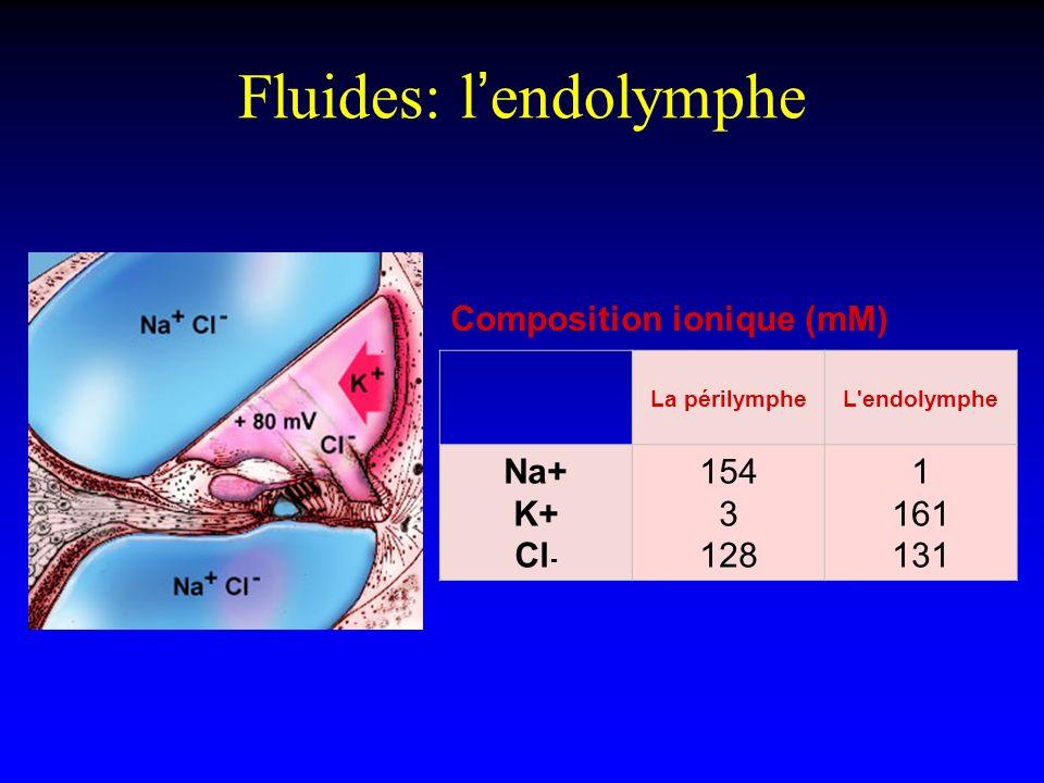 Fluides: l'endolymphe