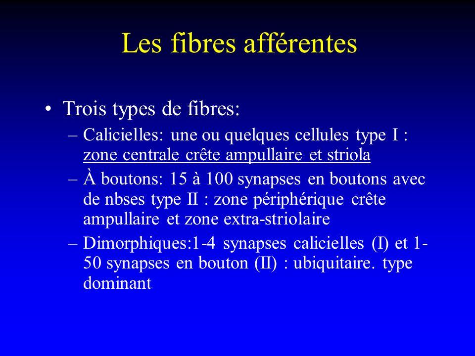 Les fibres afférentes Trois types de fibres: