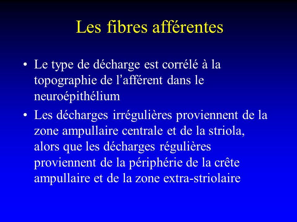 Les fibres afférentes Le type de décharge est corrélé à la topographie de l'afférent dans le neuroépithélium.