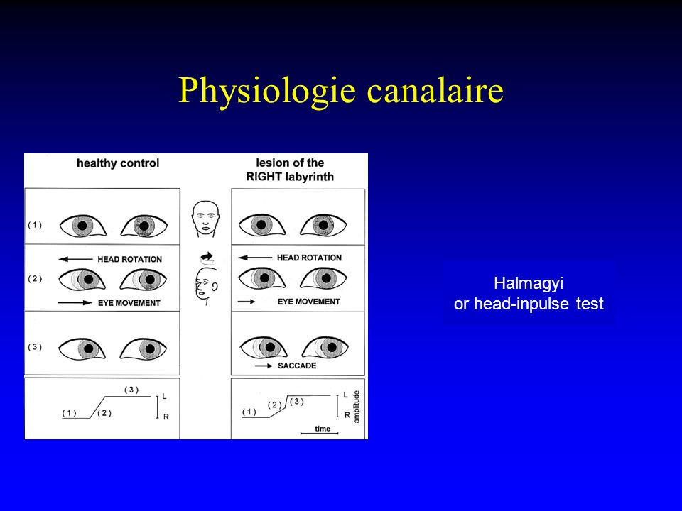 Physiologie canalaire