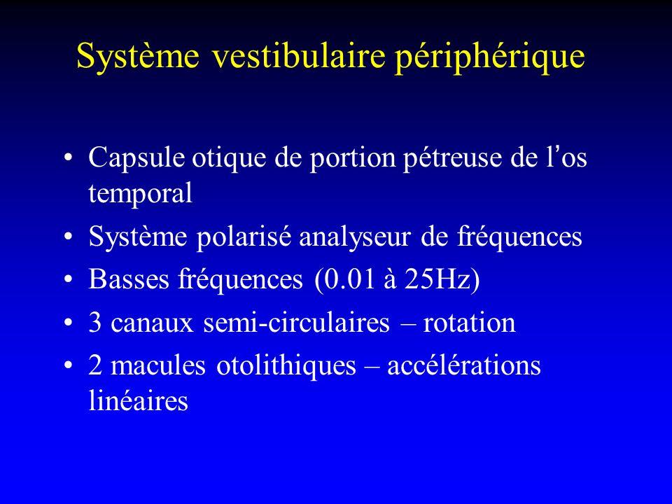 Système vestibulaire périphérique