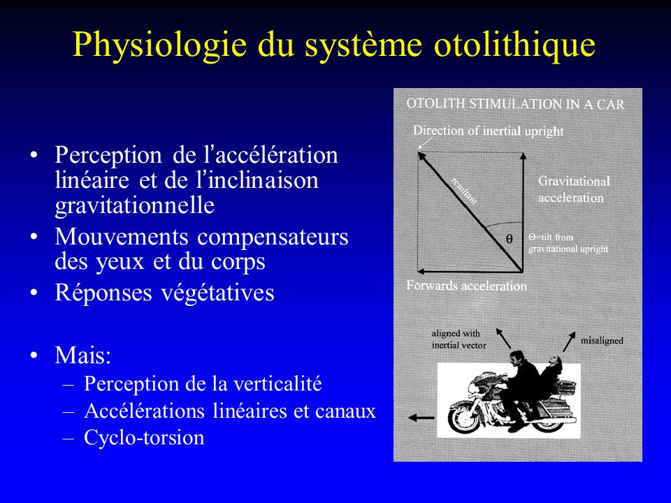 Physiologie du système otolithique