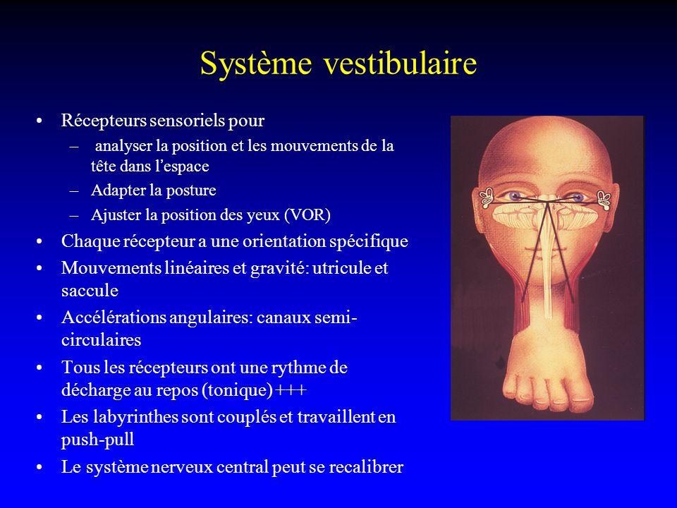 Système vestibulaire Récepteurs sensoriels pour