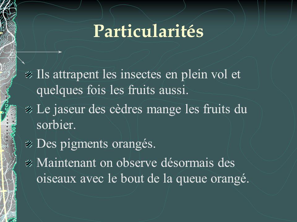 Particularités Ils attrapent les insectes en plein vol et quelques fois les fruits aussi. Le jaseur des cèdres mange les fruits du sorbier.