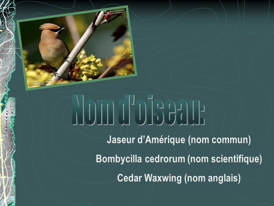 Nom d oiseau: Jaseur d'Amérique (nom commun)