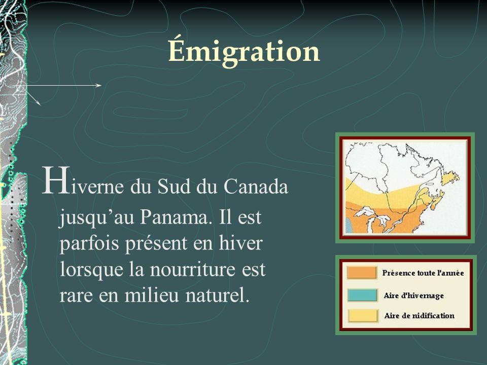 Émigration Hiverne du Sud du Canada jusqu'au Panama.
