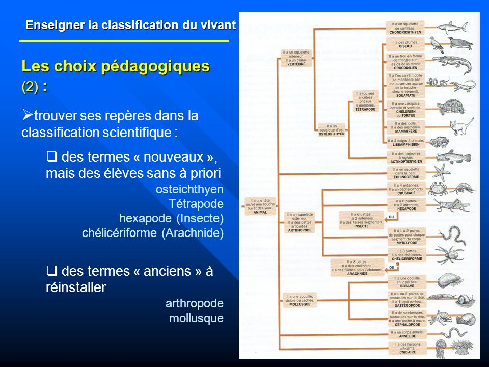Enseigner la classification du vivant