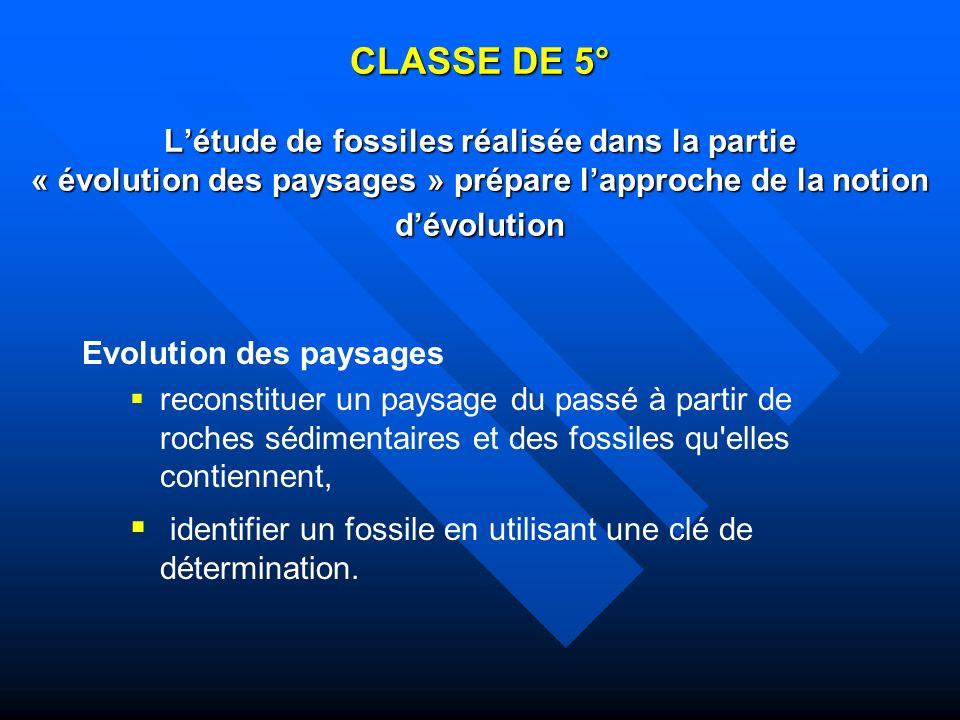 identifier un fossile en utilisant une clé de détermination.