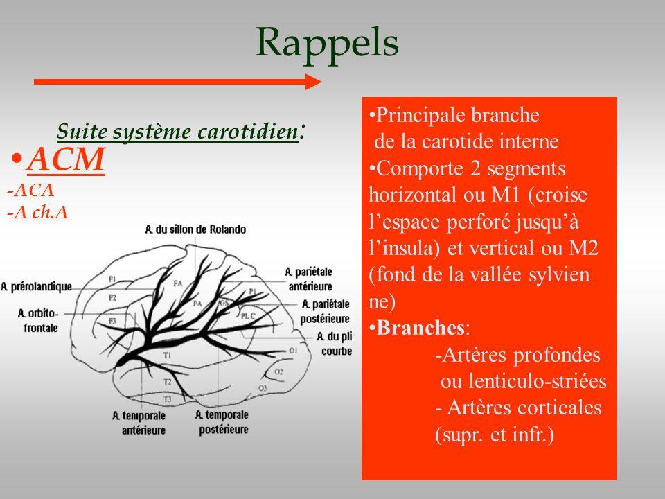 Rappels ACM Principale branche Suite système carotidien:
