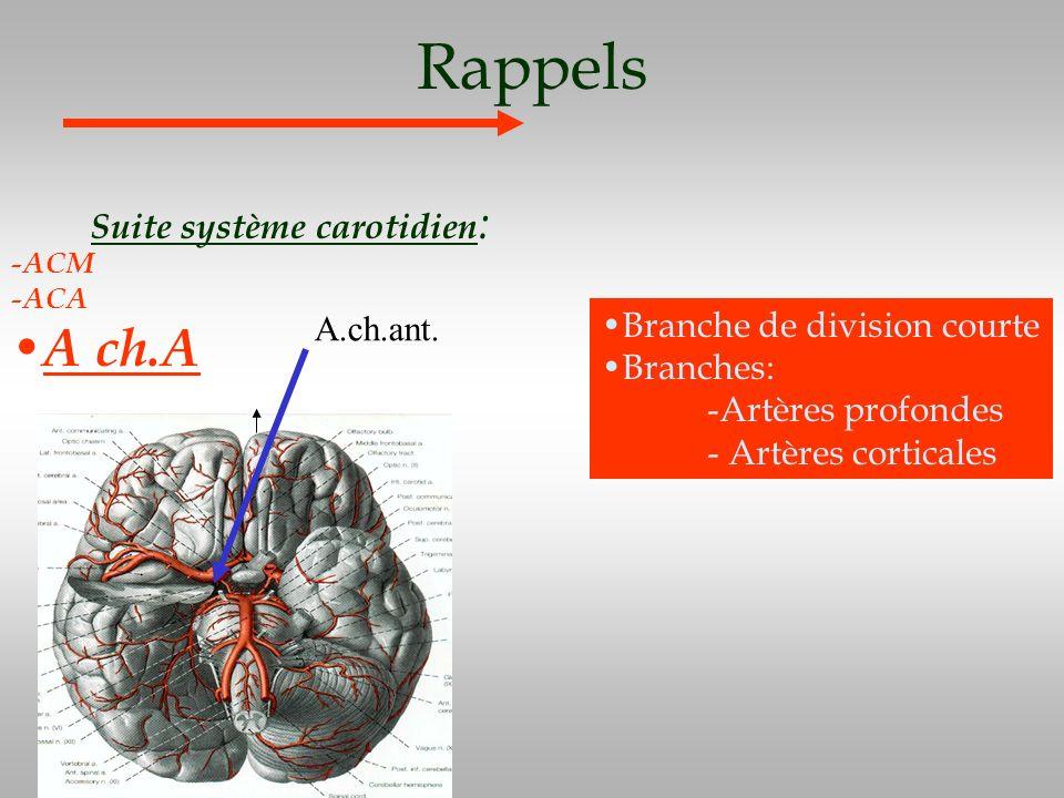 Rappels A ch.A Suite système carotidien: A.ch.ant.