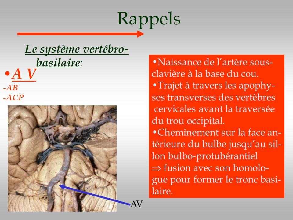 Rappels A V Le système vertébro-basilaire: Naissance de l'artère sous-
