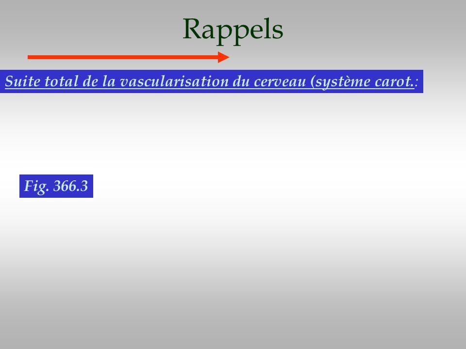 Rappels Suite total de la vascularisation du cerveau (système carot.: