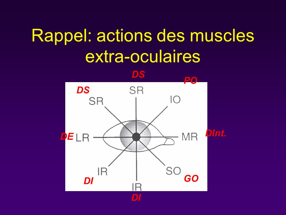 Rappel: actions des muscles extra-oculaires