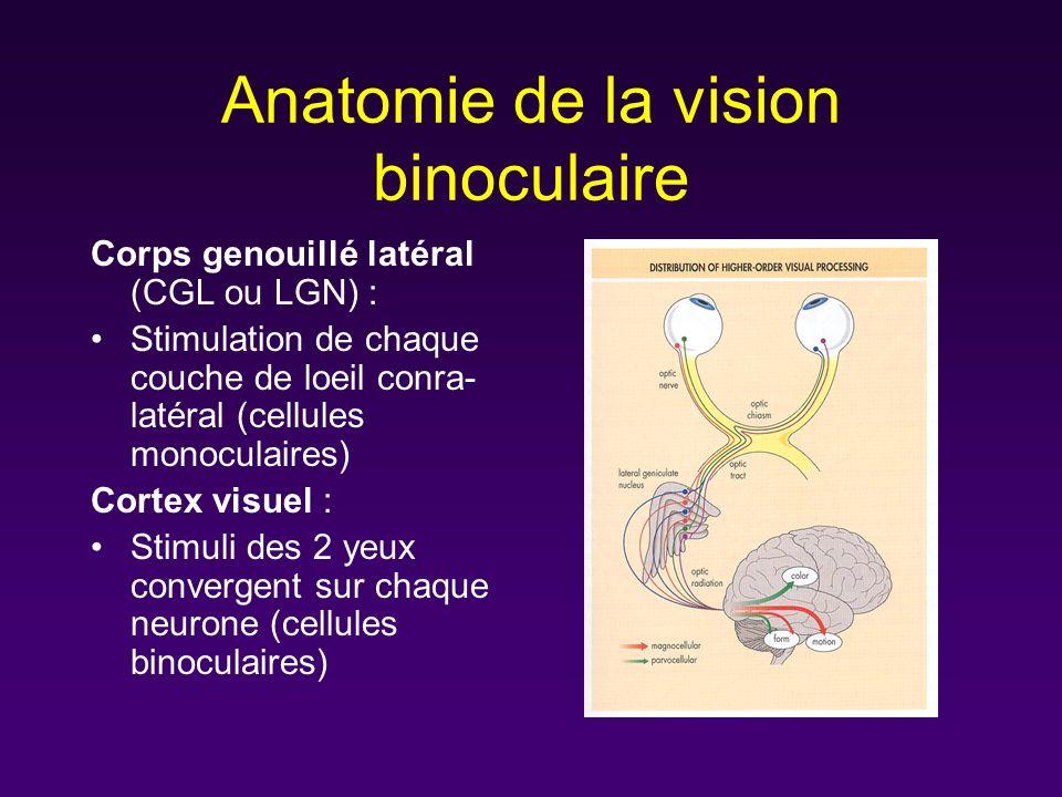 Anatomie de la vision binoculaire