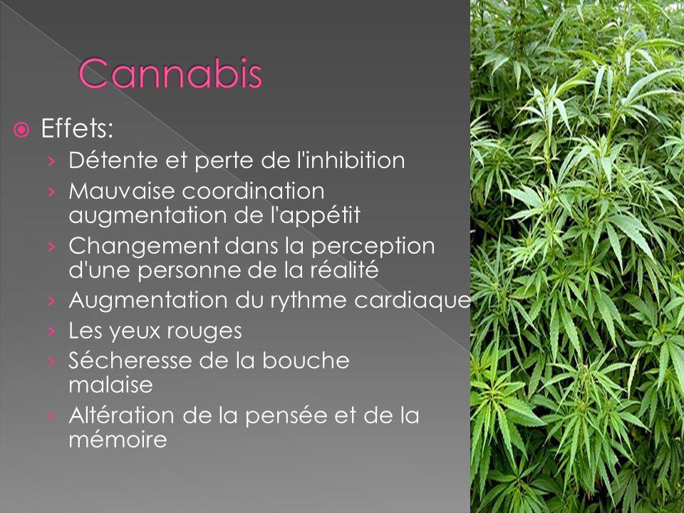 Cannabis Effets: Détente et perte de l inhibition