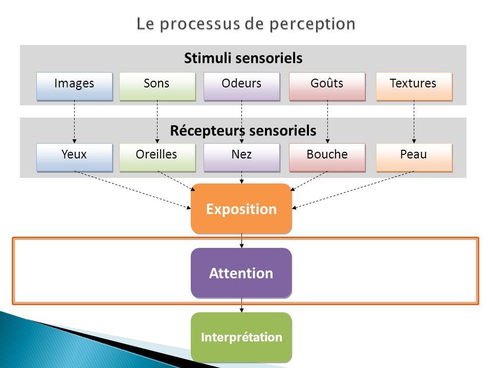 Le processus de perception