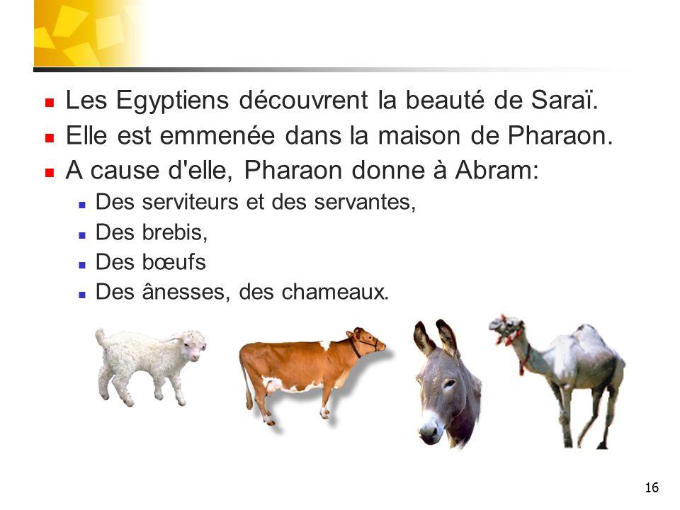 Les Egyptiens découvrent la beauté de Saraï.