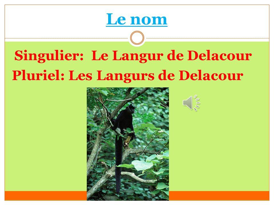 Le nom Pluriel: Les Langurs de Delacour