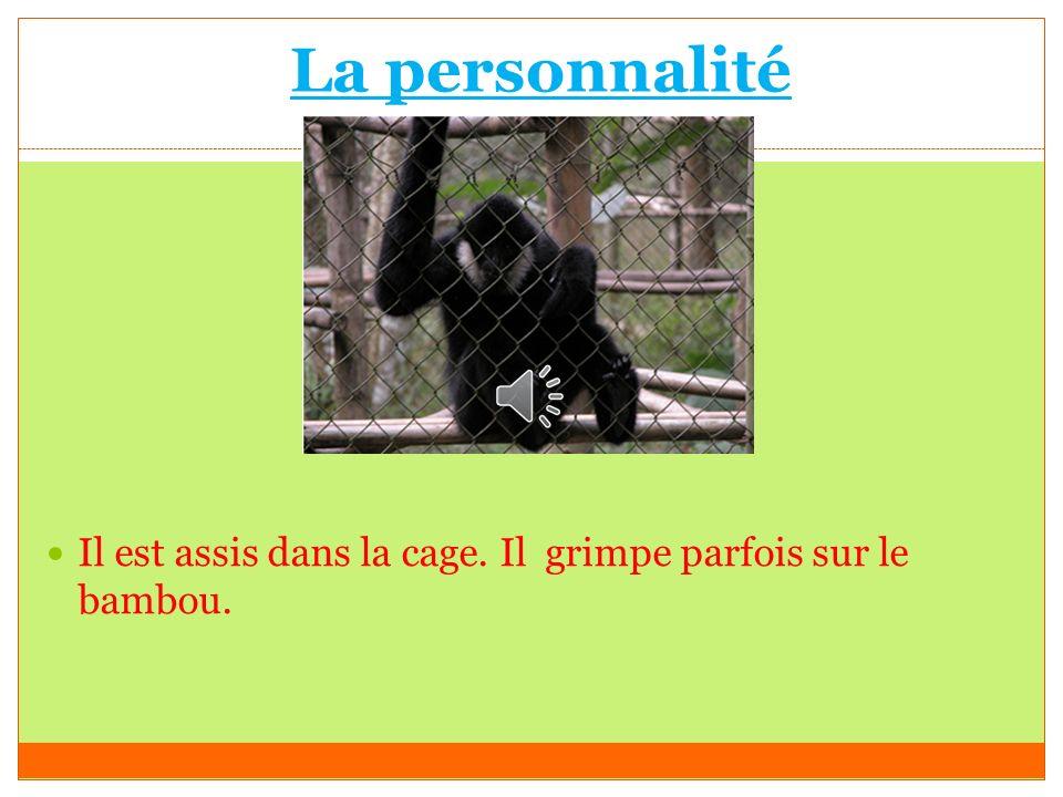 La personnalité Il est assis dans la cage. Il grimpe parfois sur le bambou. N'est pas active. Intelligent et content.