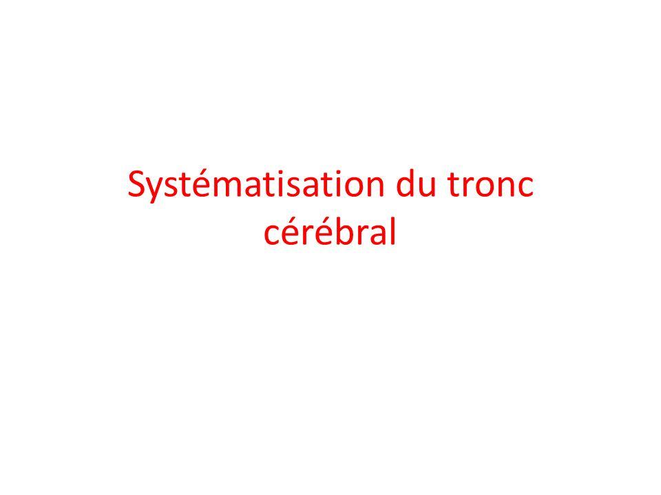 Systématisation du tronc cérébral
