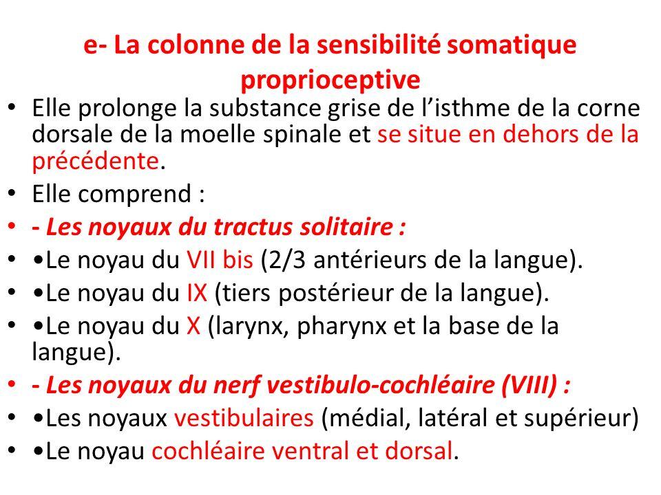 e- La colonne de la sensibilité somatique proprioceptive