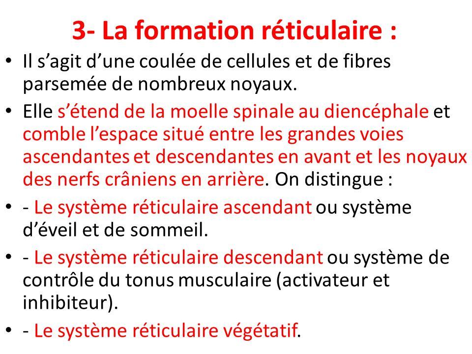 3- La formation réticulaire :