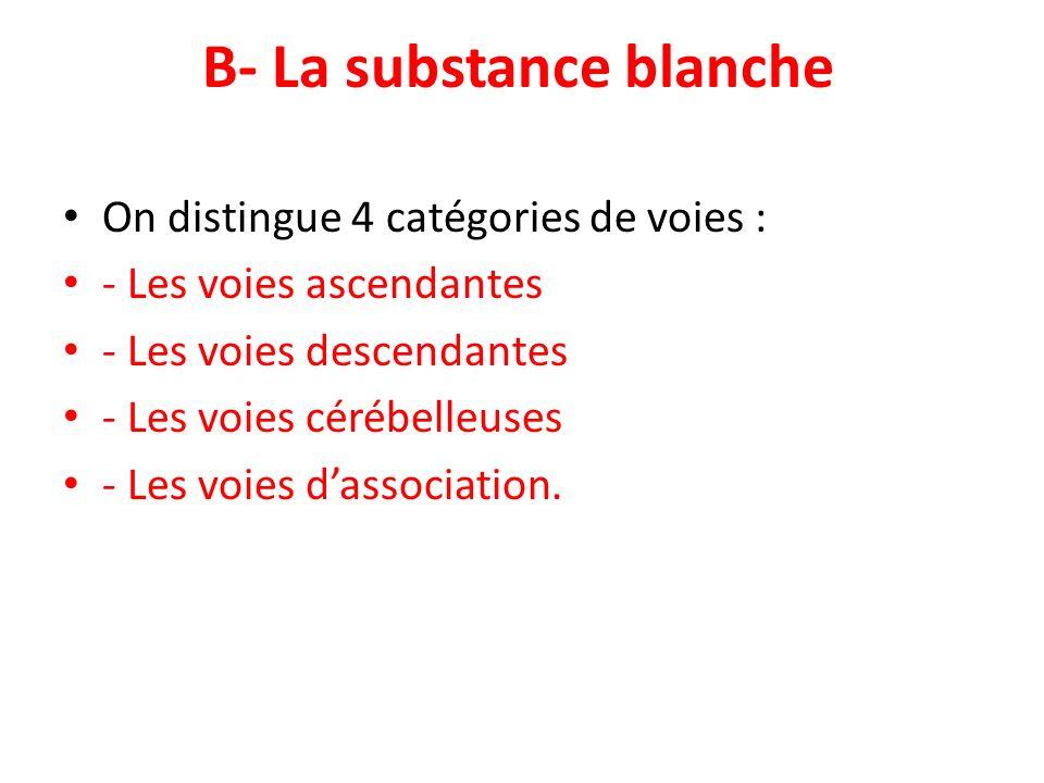 B- La substance blanche