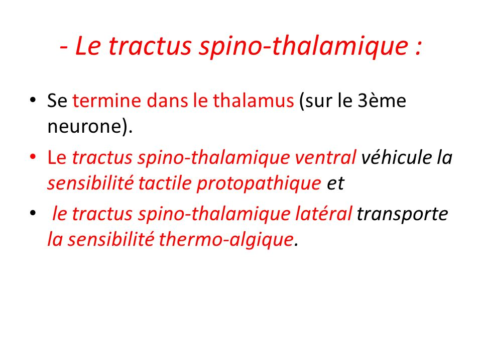 - Le tractus spino-thalamique :