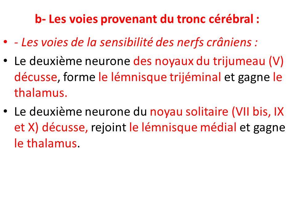 b- Les voies provenant du tronc cérébral :