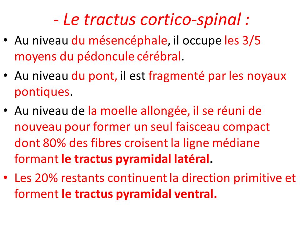 - Le tractus cortico-spinal :