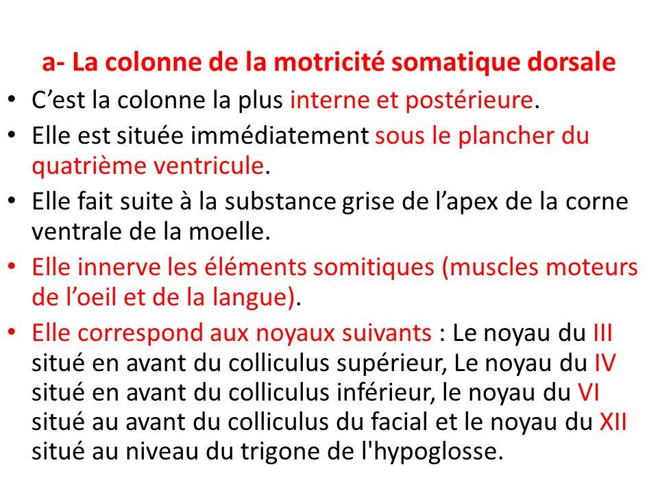 a- La colonne de la motricité somatique dorsale