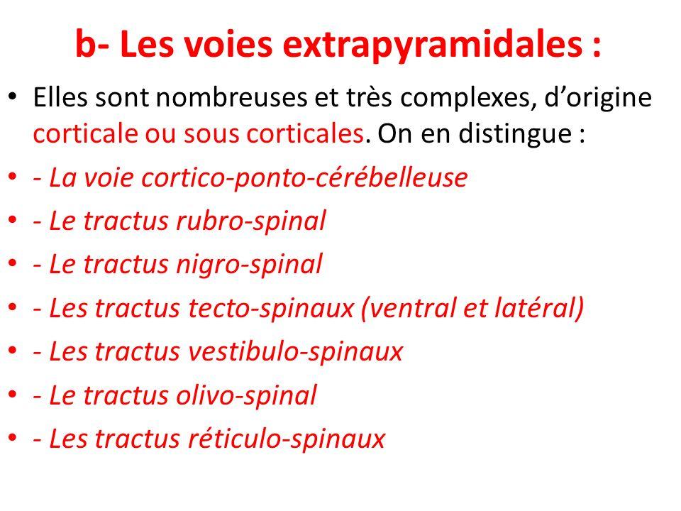 b- Les voies extrapyramidales :