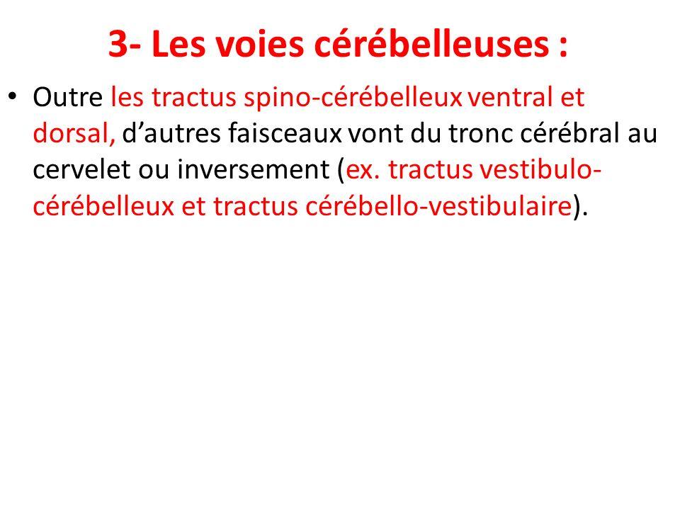 3- Les voies cérébelleuses :