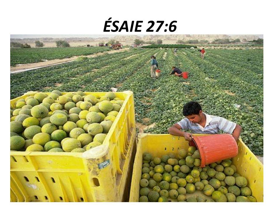 ÉSAIE 27:6 6 Un jour, Jacob poussera des racines ; Israël fleurira et s'épanouira ; ils couvriront de fruits la face de la terre.