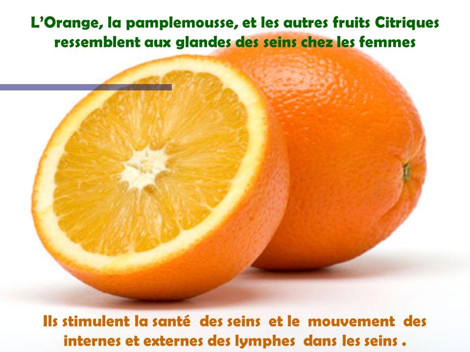 L'Orange, la pamplemousse, et les autres fruits Citriques ressemblent aux glandes des seins chez les femmes