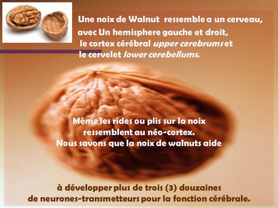 Une noix de Walnut ressemble a un cerveau,