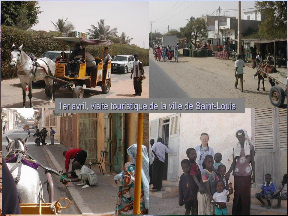 1er avril, visite touristique de la ville de Saint-Louis